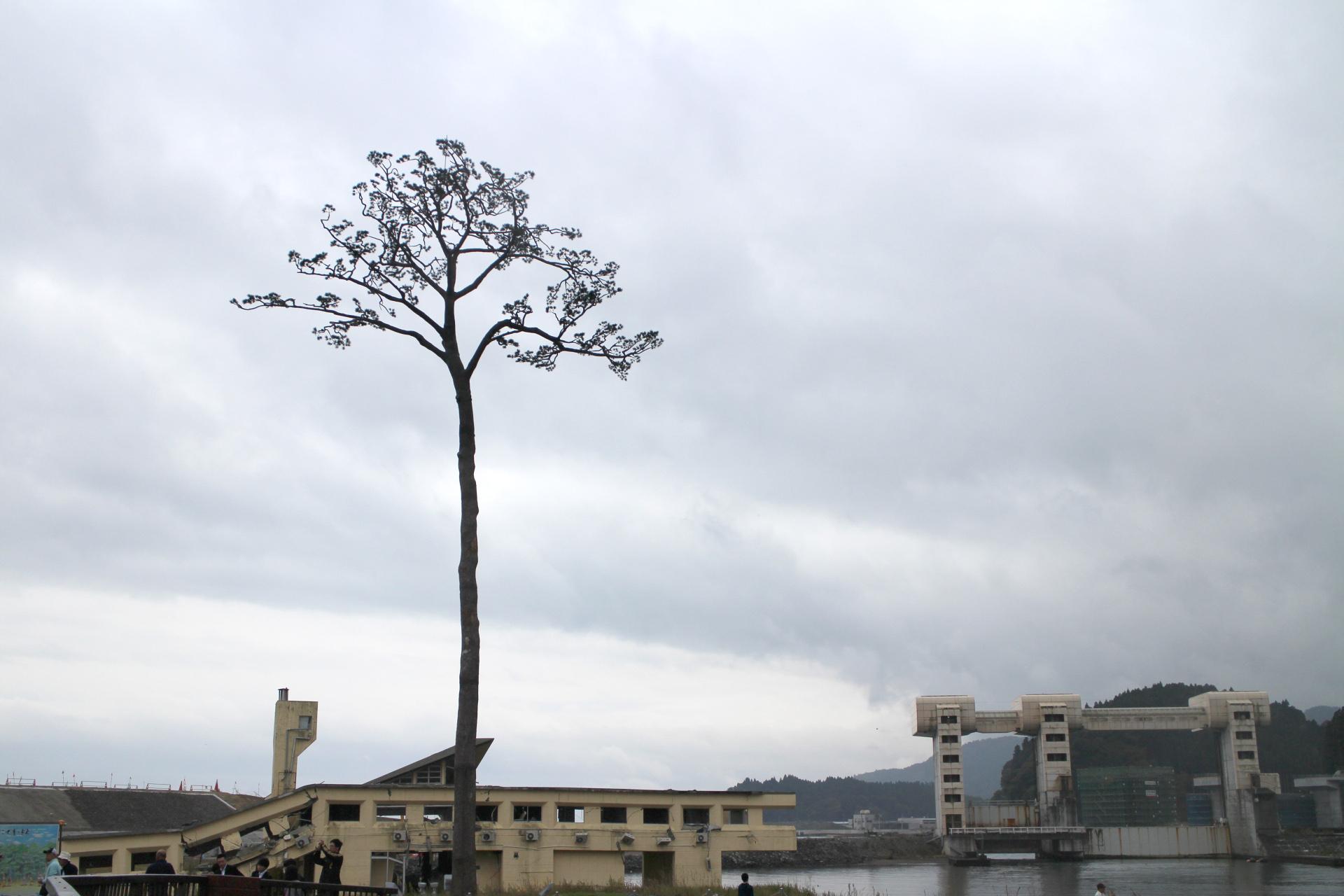 shinsaijpg (1)